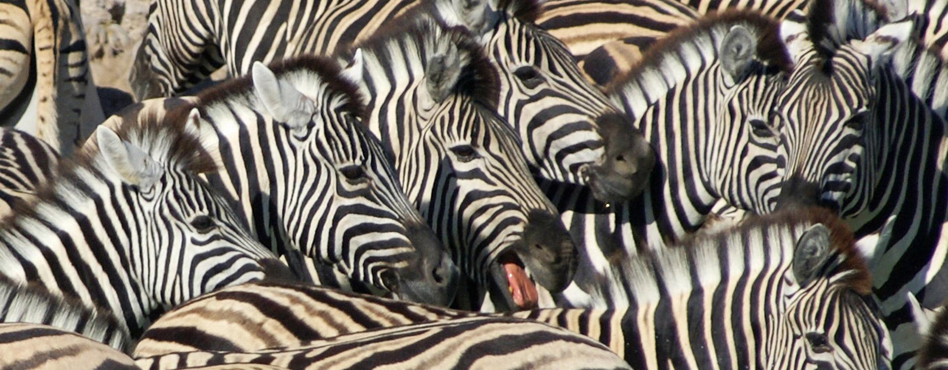 Drongo Tours Namibia